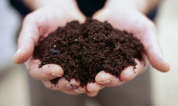 Healthy Soil Equals Healthy Humans