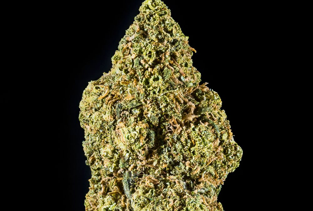 Twisted Berry (Berry White) by