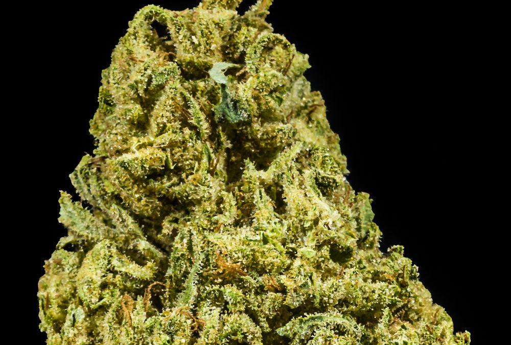 Forbidden OG by Herbanology