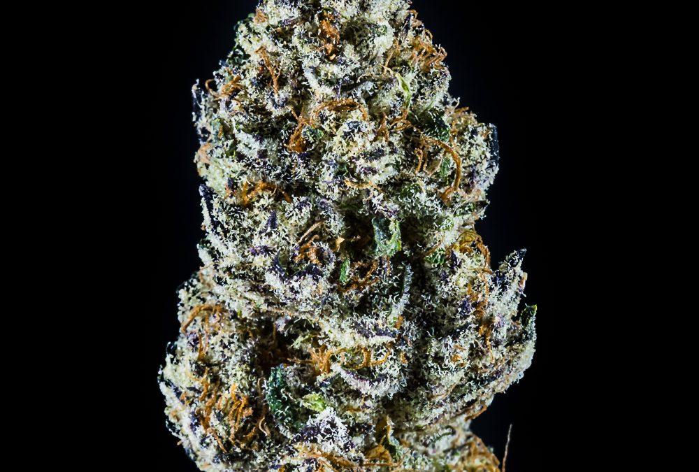 Sherbhead by Local Cannabis Company