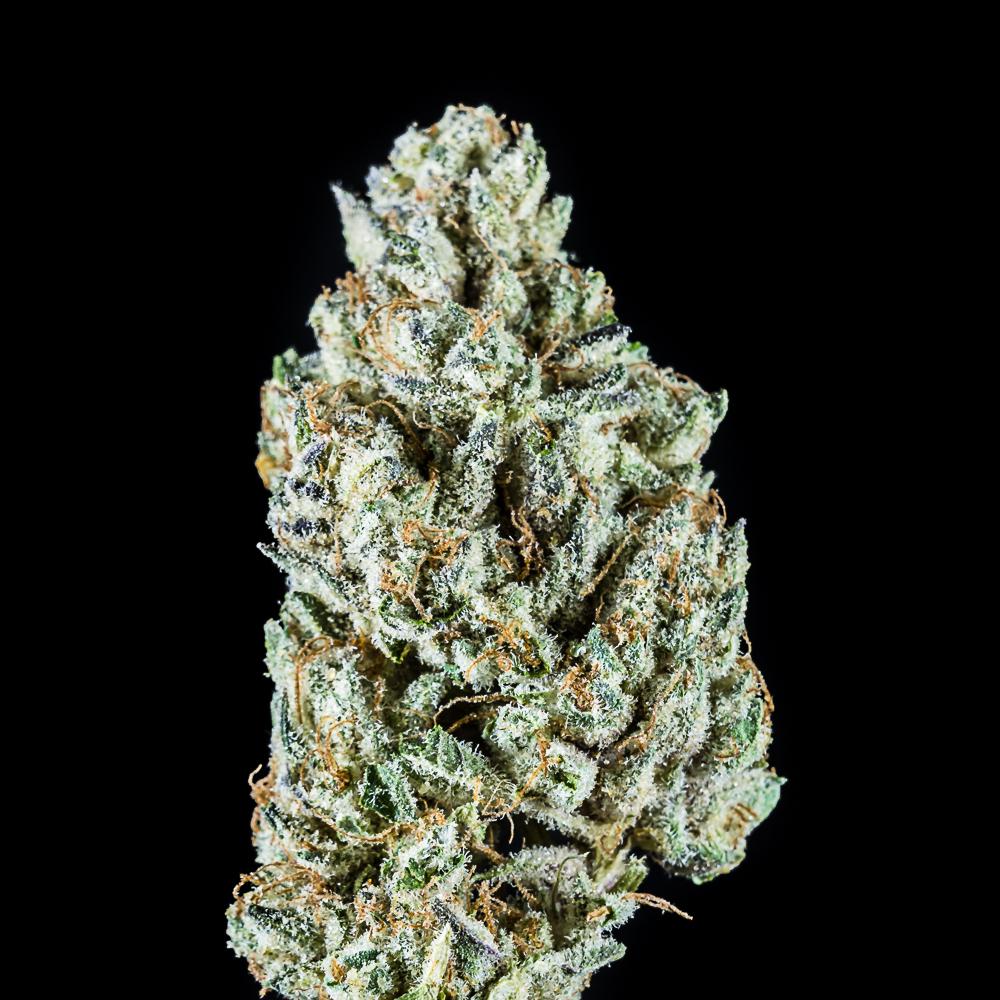 Point Break by Local Cannabis Company (Bosim 1628 Management Company, LLC)