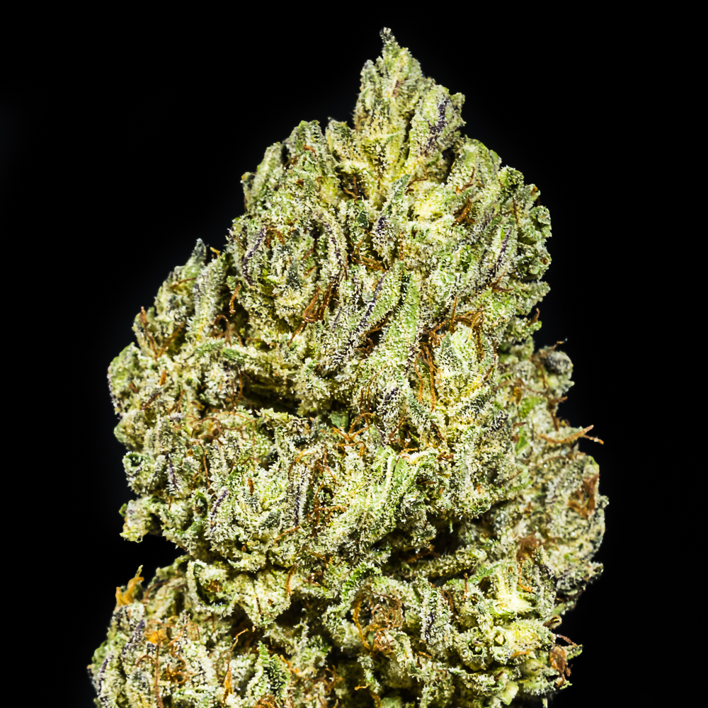 """Don Carlos - Flower by The Honeydew Creek Original Family Humboldt (THC OF Humobldt), a:1:{i:0;s:25:""""The Humboldt Seed Company"""";}"""