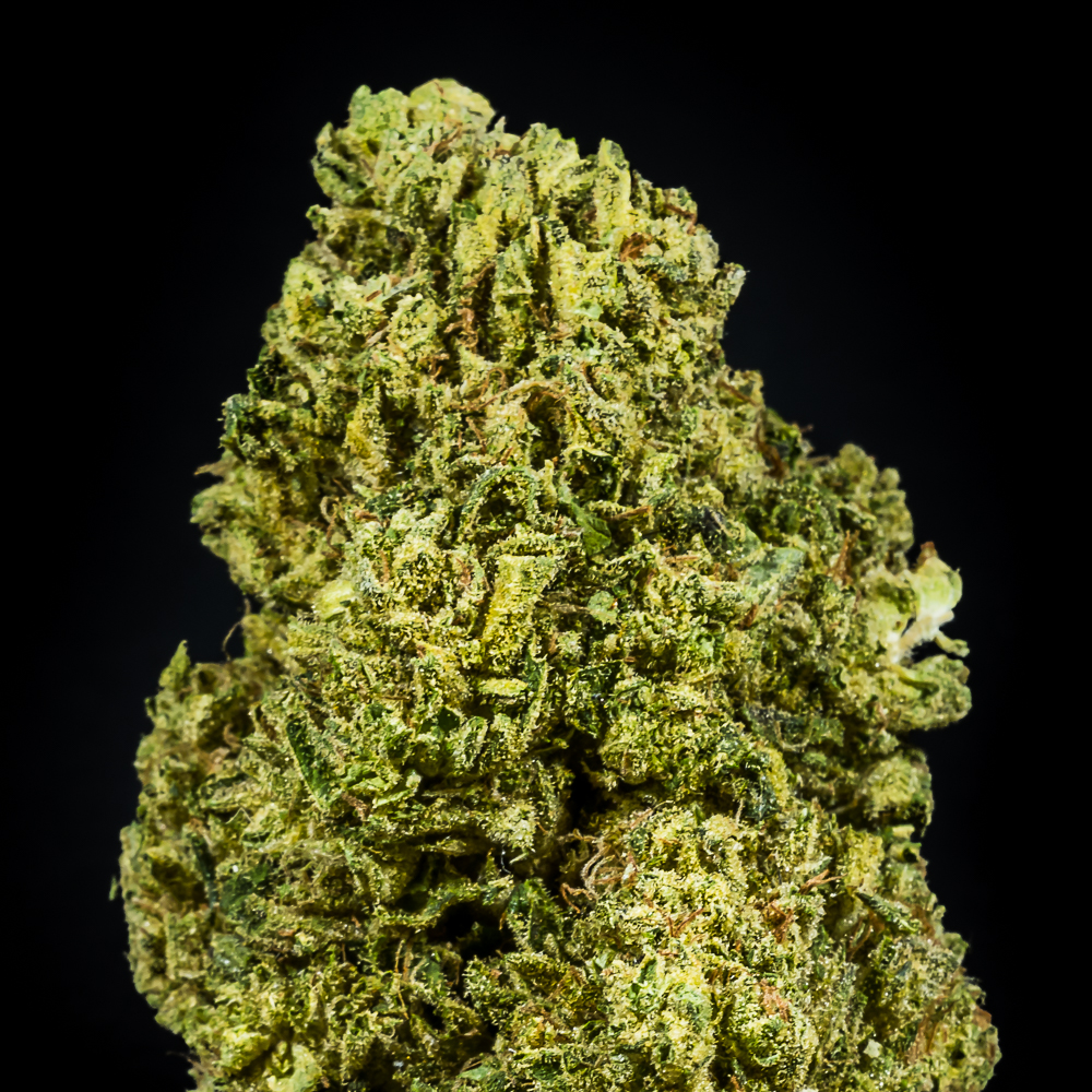 """Notorious THC - Flower by The Honeydew Creek Original Family Humboldt (THC OF Humobldt), a:1:{i:0;s:25:""""The Humboldt Seed Company"""";}"""