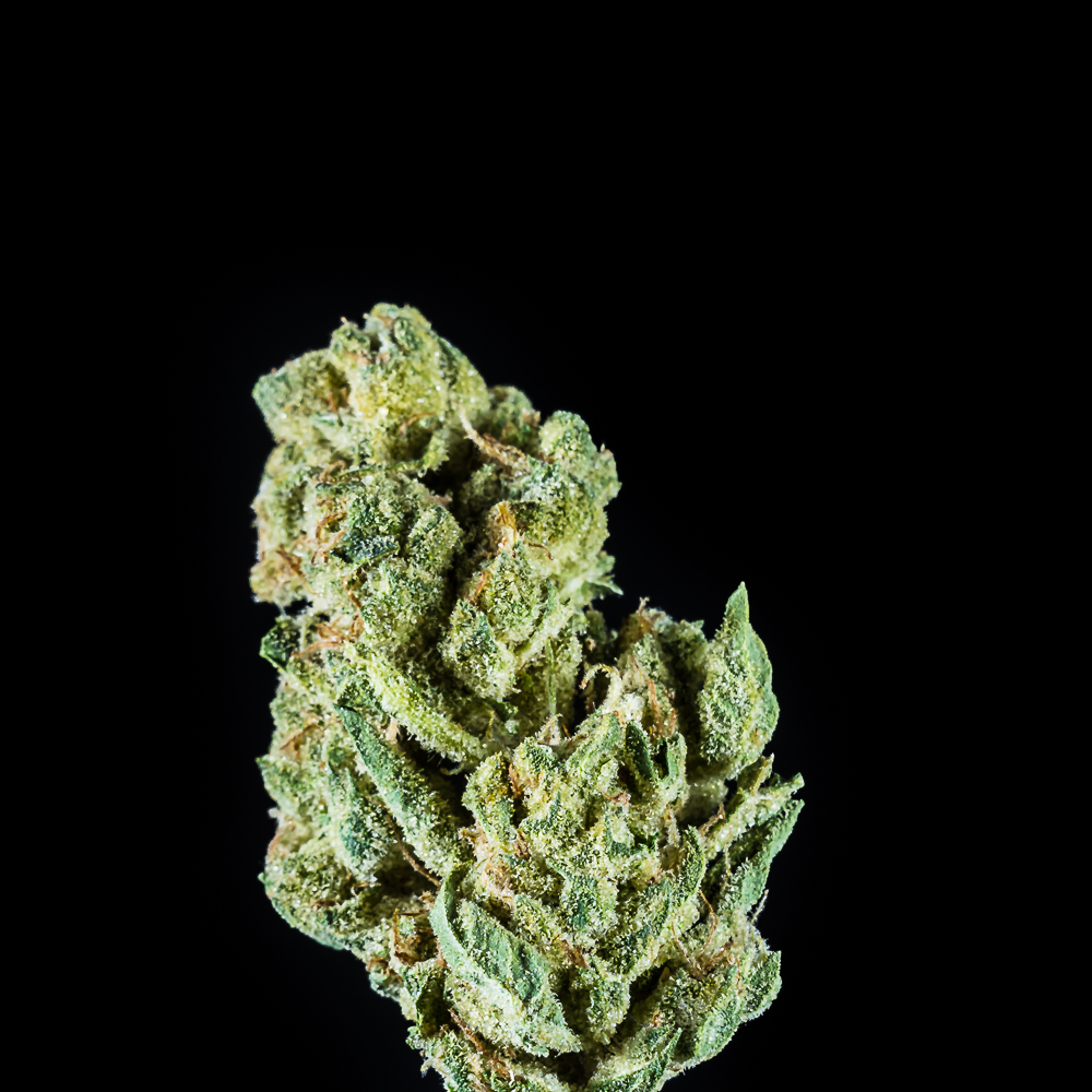 """High Supply 7g Flower Indica - """"Gordo"""" by SLO Cultivation"""