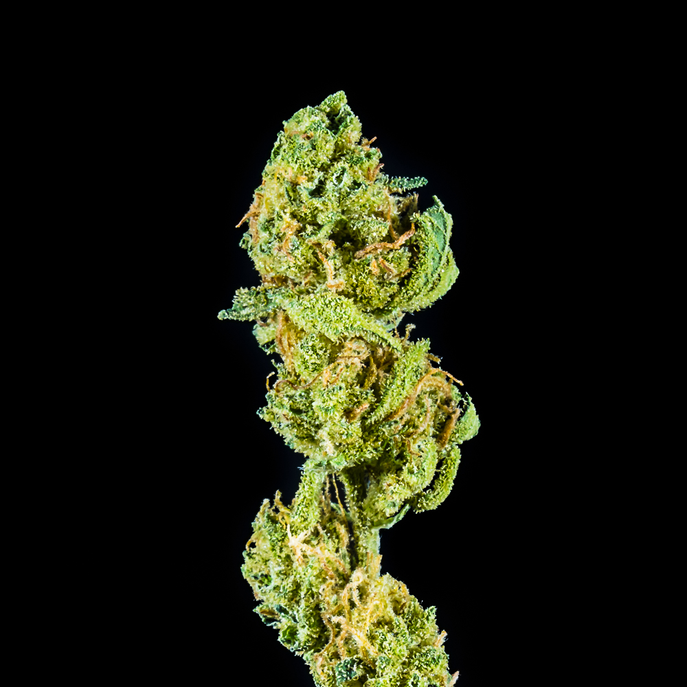"""High Supply 7g Flower Hybrid - """"Strawberry Cough Drop"""" by SLO Cultivation"""