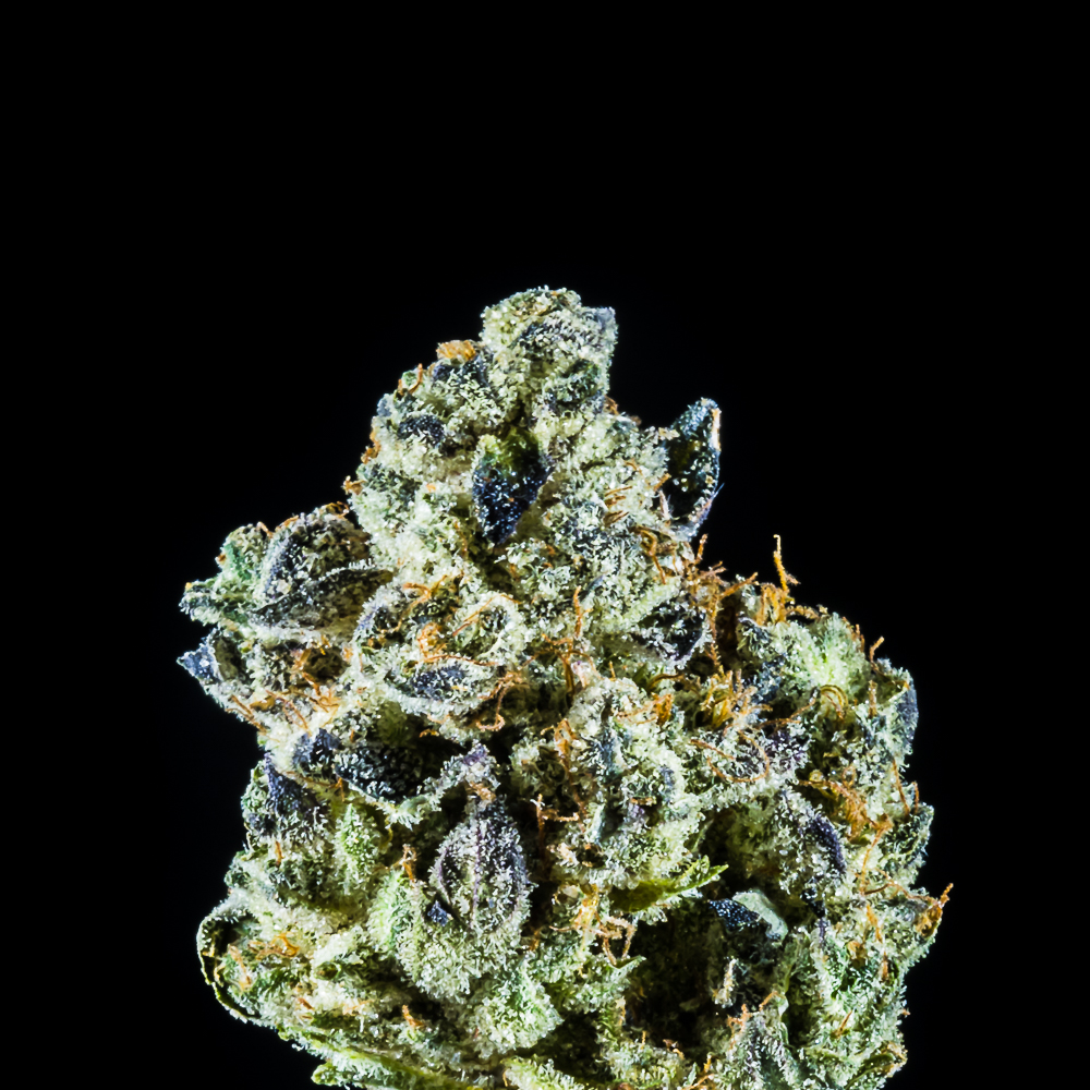 GMO Cookies by Atrium Cultivation