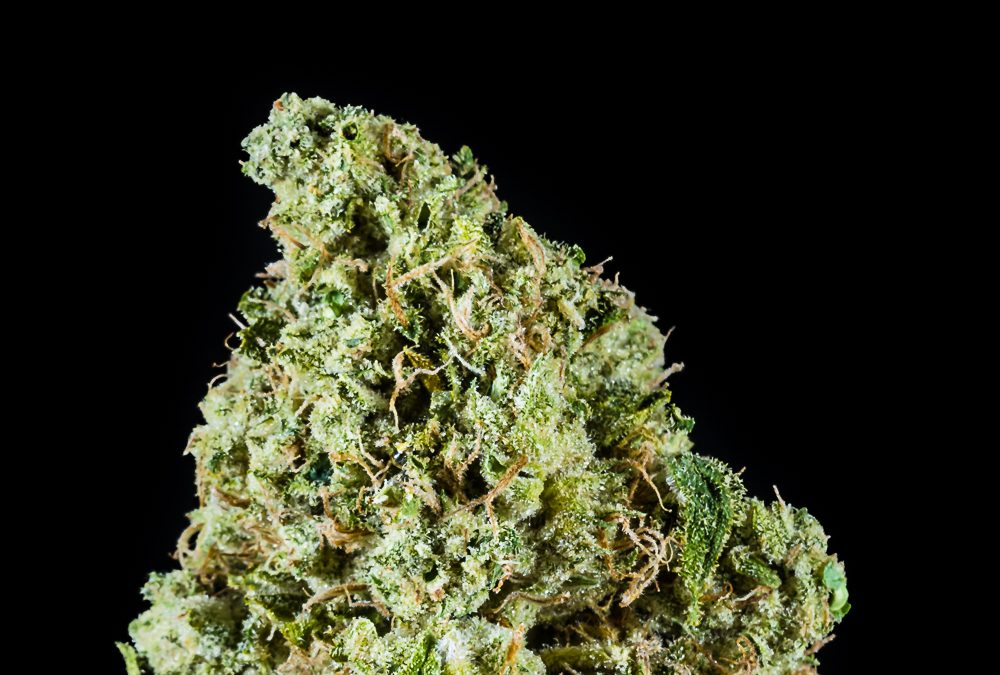 Citrus Squirt by Phytologie x Napro Research